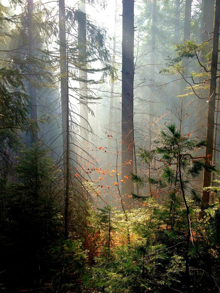 """о США: """" Лес возле города Невада - Калифорния - США (Эрин Джонсон) """""""