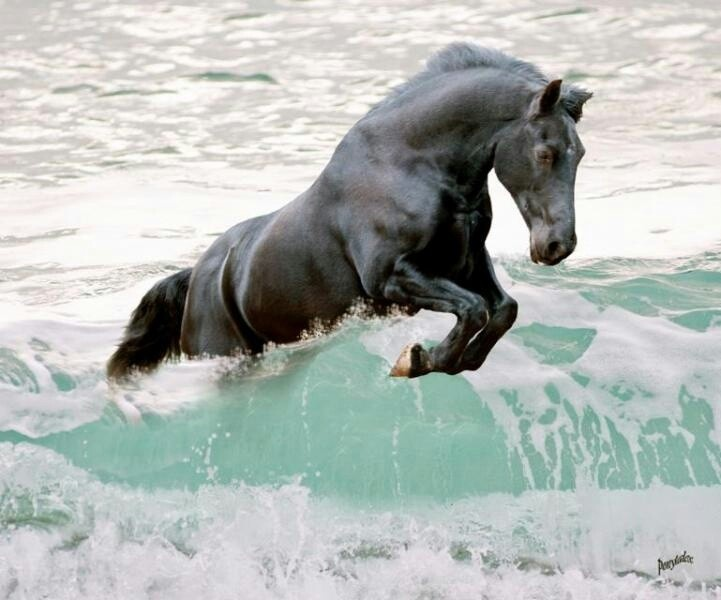 Horse jumping waves. @kimdheadlee If the horse was a lighter shade of gray, it would be perfect to represent Stonn, the horse owned by Angusel (Lancelot) in The Dragon's Dove Chronicles (DAWNFLIGHT, MORNING'S JOURNEY, RAGING SEA, etc.) by Kim Headlee.