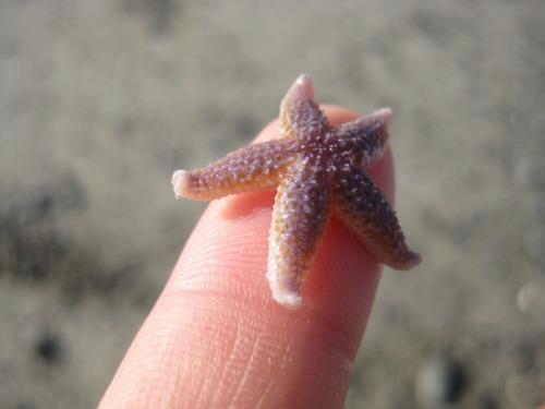 Cute Baby Starfish