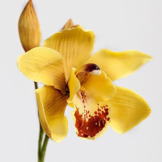 Sugar Orchid by Robert Haynes (Sugar Flower Studio)