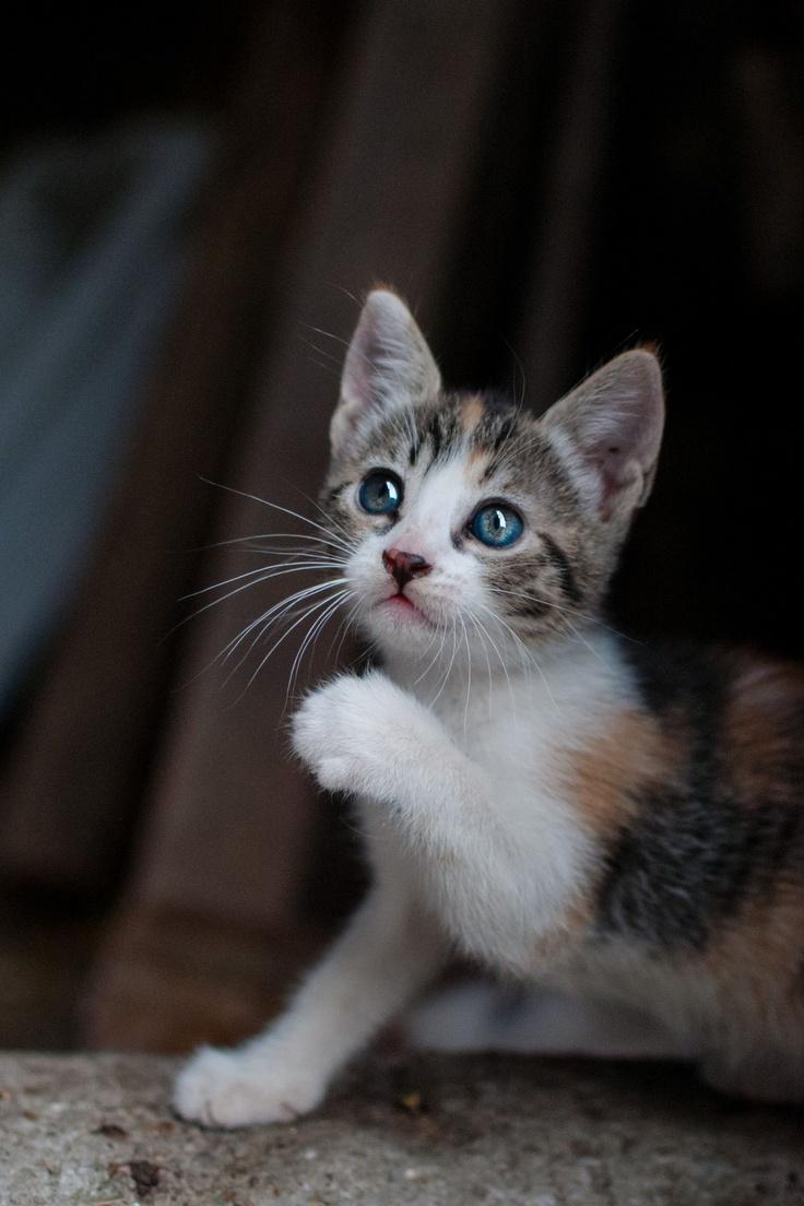 Un gatito