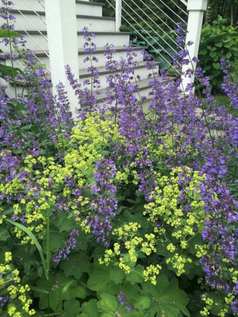 My Favorite Plant Combinations 25