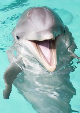 dolfijn (© www.schalkefotografie.nl)