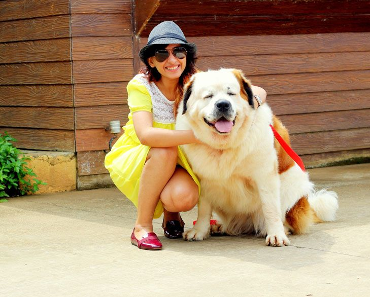 Are you a #Pet lover? do you always like like to see pets around you? here are Pet #Friendly #Travel Locations in #India