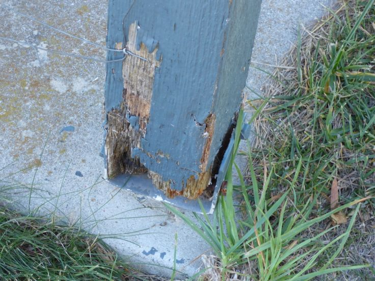 This post also suffers fungal attack. It is not termites.