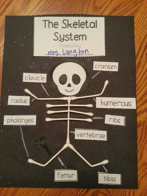Use Q-Tips to create a simple model of the human skeleton FREEBIE