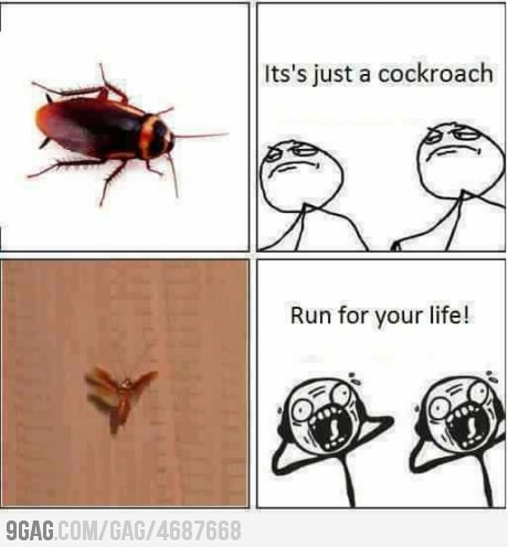 Run for your Life...: Flying, Life, Good Things, Funny Pictures, Random, Funny Stuff, So True, Funny Photos, Humor
