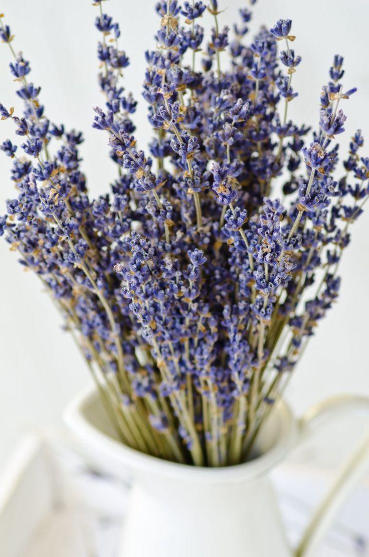 Oltre 25 fantastiche idee su piante da interno su - Piante da interno purifica aria ...