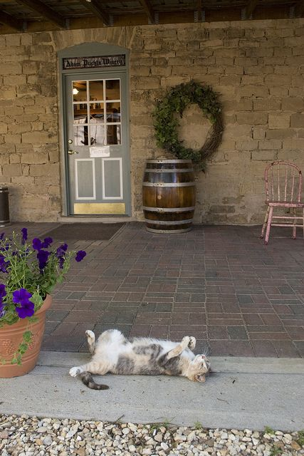 Adam Puchta Winery, Gasconade County, Hermann, by Missouri Division of Tourism, via Flickr