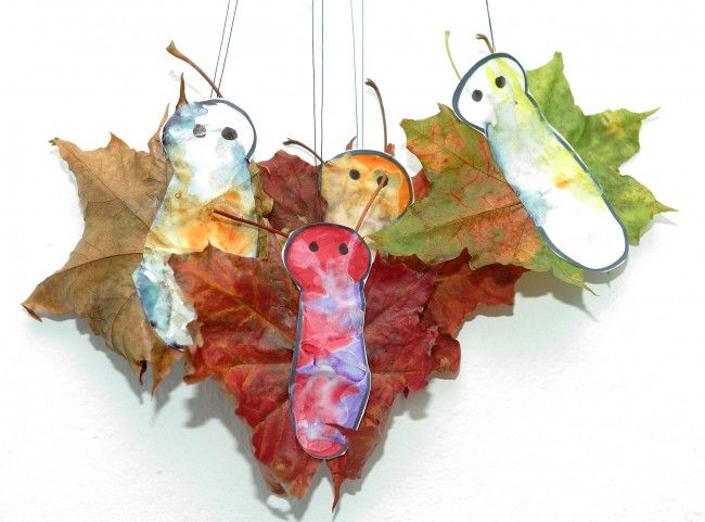 Autumn butteflies, autumn leaves