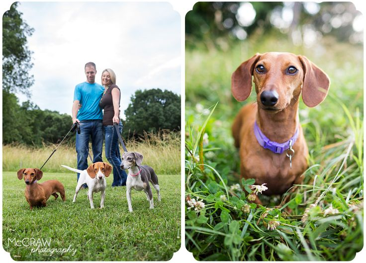 some great examples of family pet photography