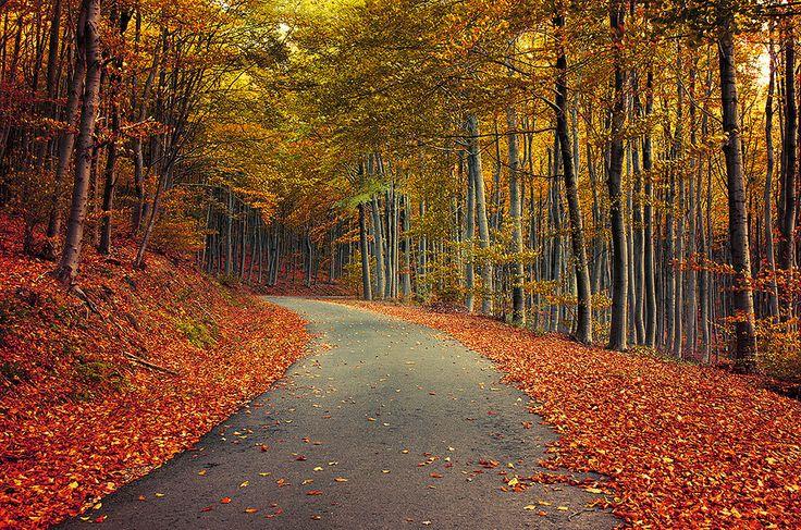 https://flic.kr/p/ziGEyb | Autumn Journey pt.XIX. | www.realitydream.hu
