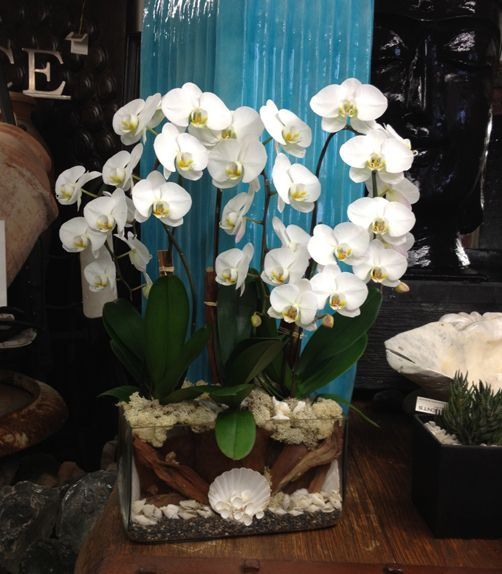 Signature Orchid Arrangement  www.designersviews.com
