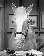 A horse is a horse, of course, of course, And no one can talk to a horse of course. That is, of course, unless the horse is the famous Mr. Ed.  source: http://www.lyricsondemand.com/tvthemes/mredlyrics.html