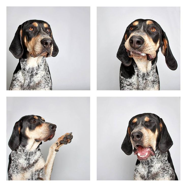 Sherlock One-year-old Bluetick Coonhound mix.  Candid Canines: Utah Shelter Dogs In Pics