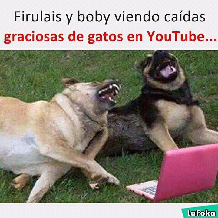 Memes De Twenty One Pilots Perro Riendo Humor De Perros Gracioso