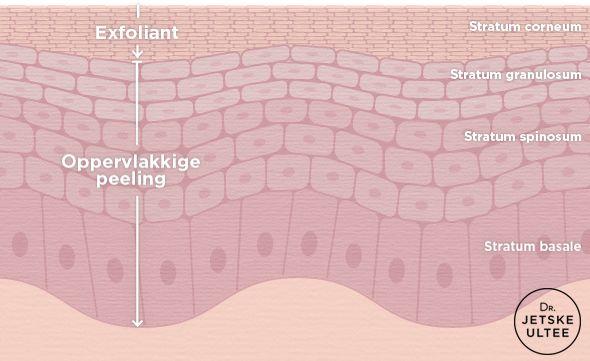 Dr. Jetske Ultee   Een dagelijkse exfoliant VS een oppervlakkige peeling. Hoe diep dringt een exfoliant met (max 2%) salicylzuur de huid in? En hoe diep dringt een chemische peeling met (max 30%) salicylzuur de huid in? #salicylic #acid #peeling #epidermis #huid #huidlagen #exfoliant #infographic