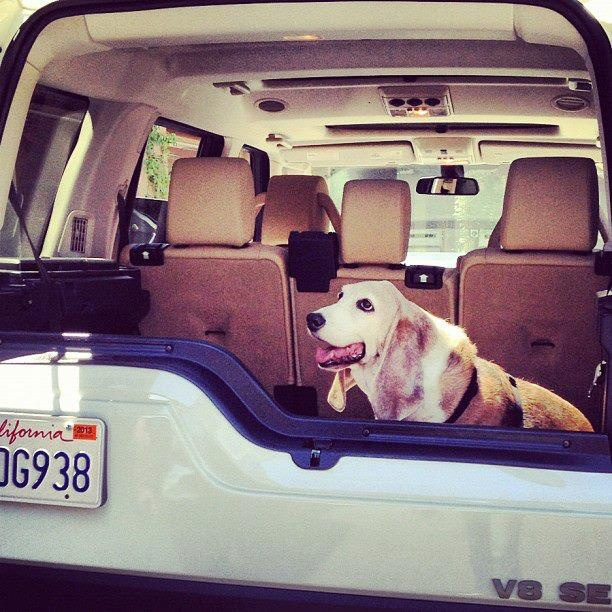 64 Best Images About Land Rover Lr4 On Pinterest: 17 Best Images About Dogs Love Land Rovers On Pinterest