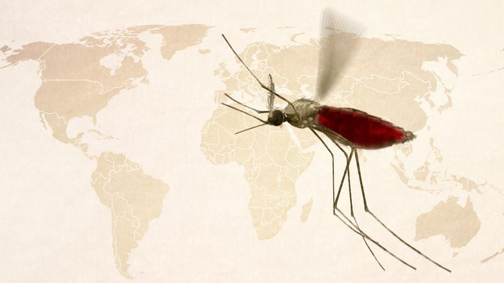 Gin, Jesuit priests, communist bravado — the history of malaria is littered with strange bedfellows, as our video shows. The parasite has proved to be a wily foe, frustrating human efforts to control it time and time again.