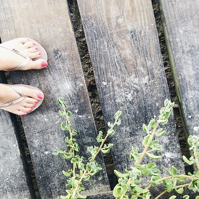 """But I say, walk by the Spirit, and you will not carry out the desire of the flesh."" Galatians 5:16-17 #verseoftheday #walkingwithgod Instagram photos feet  boardwalk watermelon pedicure"
