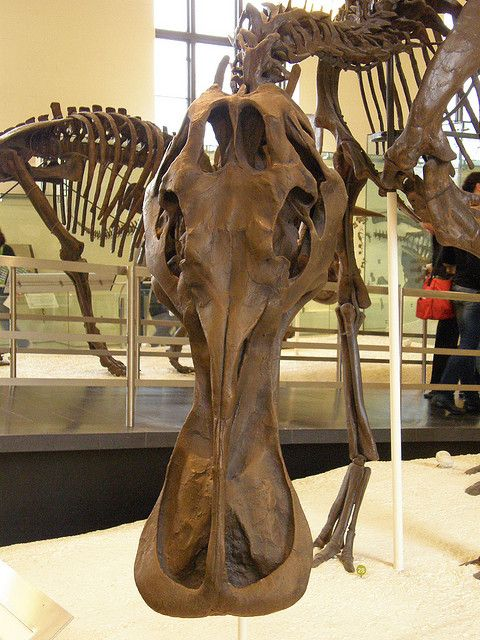 17 best images about passion for fossils on pinterest Dinosaur museum ohio