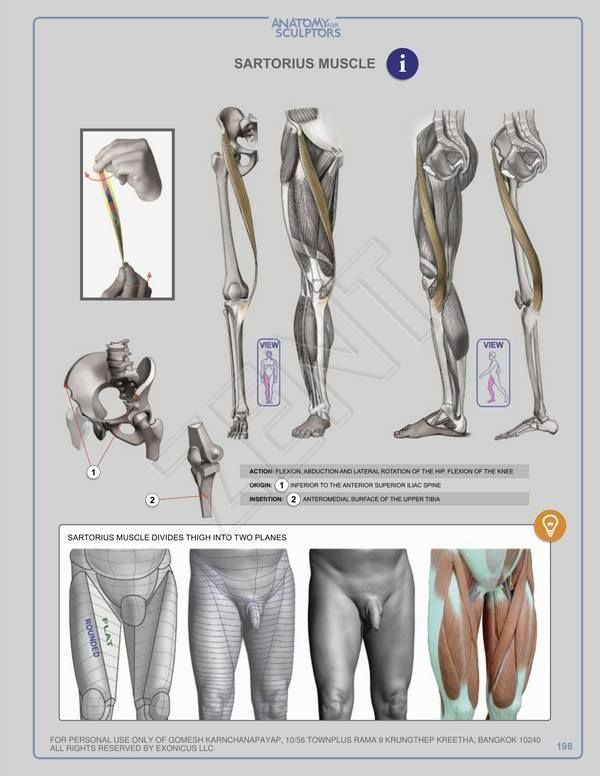 189 Best Anatomy For Artists Images On Pinterest Drawing Tutorials