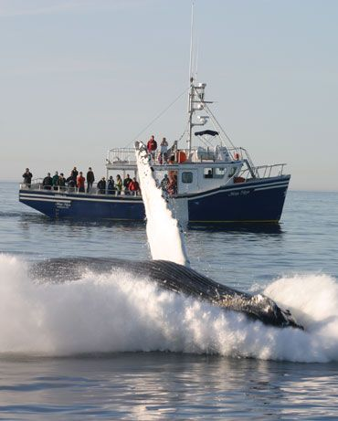Nova Scotia whale watching... reminds me of that Radiolab edition.