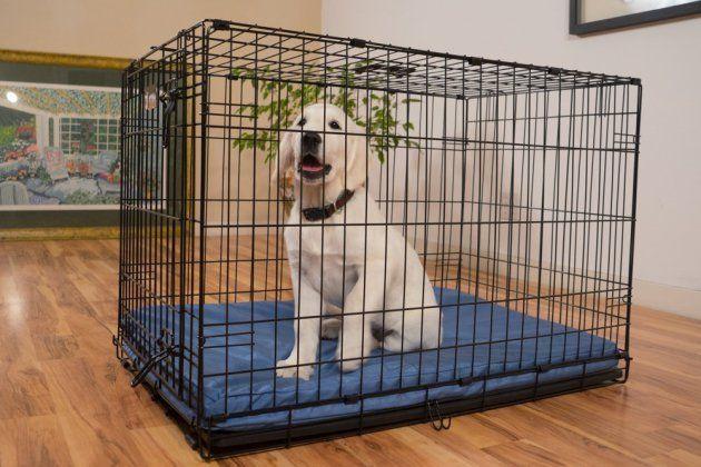 K9 Ballistics TUFF Orthopedic Memory Foam Dog Crate Pad with waterproof Liner | Best Chew Proof Dog Beds | Chew Resistant Dog Beds #dogbeds #dogbedsforlargedogs