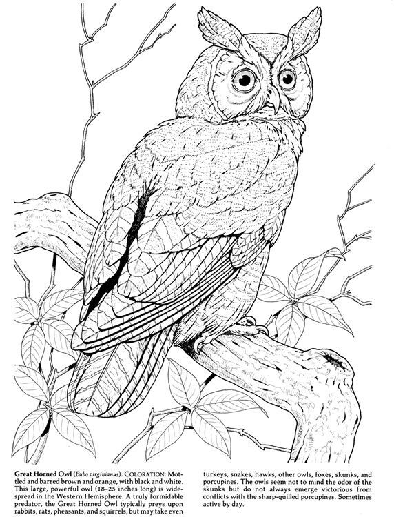 retro owl coloring pages | 56 best adult coloring pages images on Pinterest ...
