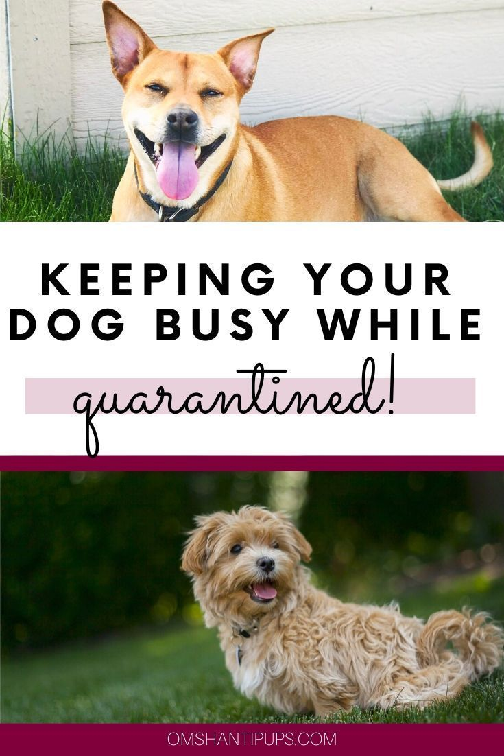 Great Ways To Keep Your Dog Active While Social Distancing In 2020 Dogs Your Dog Bored Dog