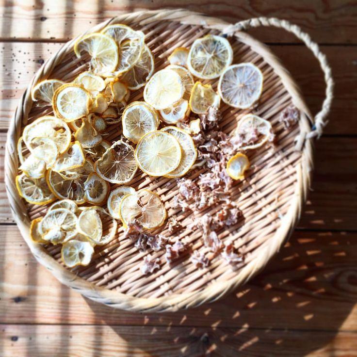 干しレモン&干し生姜 @vege_mania「いい陽気の日に作るものその2。お茶用の干しレモンと干ししょうが。 しょうがはかなり薄くしたからちりちりのカラカラ。レモンもほとんどよさそう。…」 #長尾智子 #TomokoNagao #ベジマニア