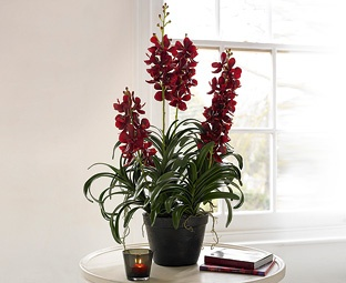 Great fakes - Red Vanda Orchid