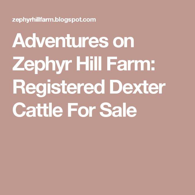 Adventures on Zephyr Hill Farm: Registered Dexter Cattle For Sale