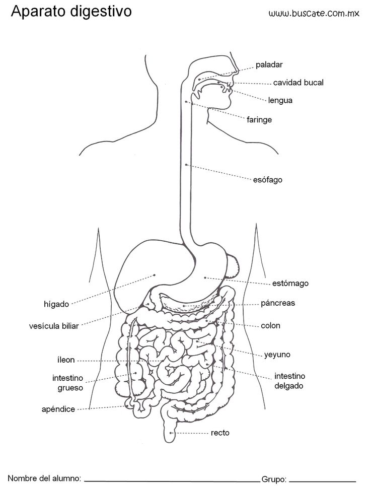 Esquema  del aparato digestivo con nombres.