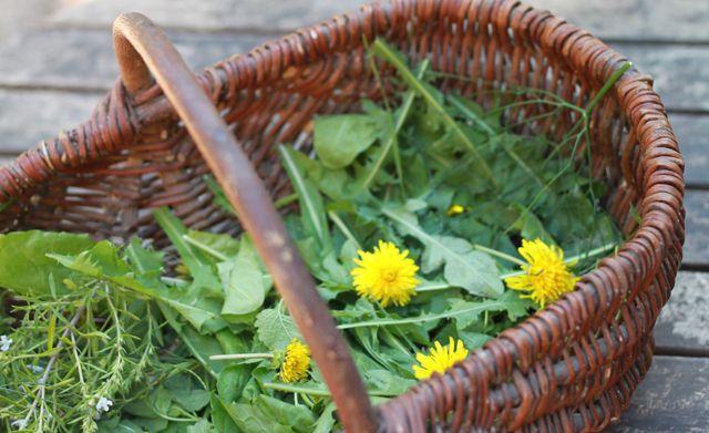 Cuisine sauvage : Comment cuisiner des pissenlits ? On en trouve partout dans les champs et les jardins, pourtant peu de gens les cuisinent. Voici 1 recette facile.