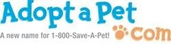 http://www.adoptapet.com/pet/8695192-smyrna-georgia-yorkie-yorkshire-terrier-mix?view_src=sshtml