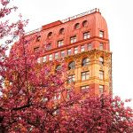 Cherry Blossoms Frame the Dominion Building in Vancouver
