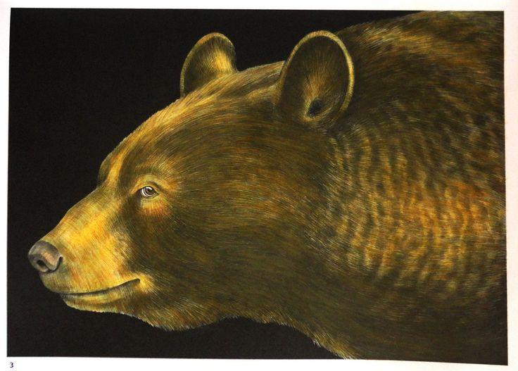 Tim Jeffs -  Intricate Ink Animals in Details volume 1   Black Bear  Coloured with Derwent Artist (gold selection) pencils