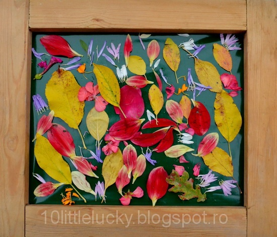 leaves and petals stuck onto contact paper - framing it makes it extra special