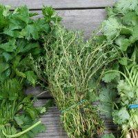 jedlé rastliny - prehľad