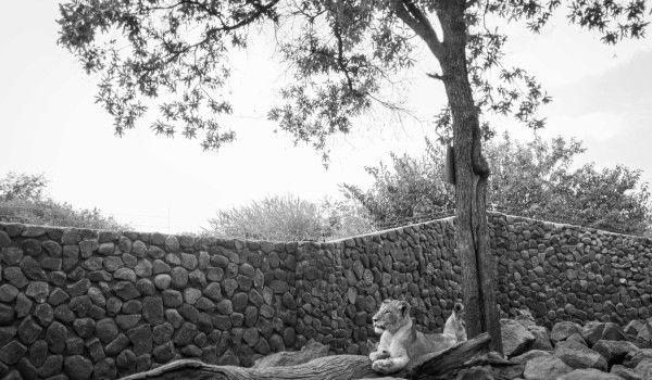 Sud Africa – giovani leoni
