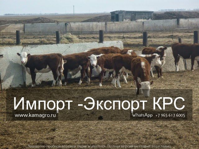 Мы в соц сетях.... заходите в гости http://kamagro.ru/prodazha-krs  1️⃣ Мы в контакте               https://vk.com/prodazha_krs 2️⃣ Наш сайт                       www.kamagro.com 3️⃣ Сайт моб.версия         www.kamagro.ru 4️⃣ Страница ГУГЛ            https://plus.google.com/collection/A7OlqB 5️⃣ Агросервер                   http://oookamagro.agroserver.ru/ 6️⃣ Мы в твиттере              https://twitter.com/ooo_kamagro 7️⃣ Так же мы есть в          Viber/ WhatsApp/ Telegram  (89656176005) 8️⃣…