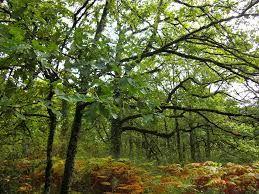Este robledal atlántico encharcado, próximo al municipio de Lizaso, constituye un bosque caducifolio de gran belleza ...