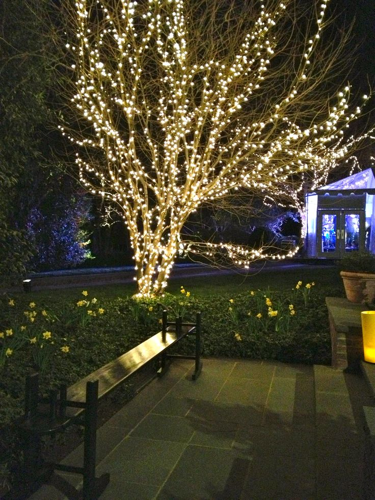 17 Best ideas about Outdoor Tree Lighting on Pinterest | Outdoor ...:Wonderful outdoor lighting,Lighting
