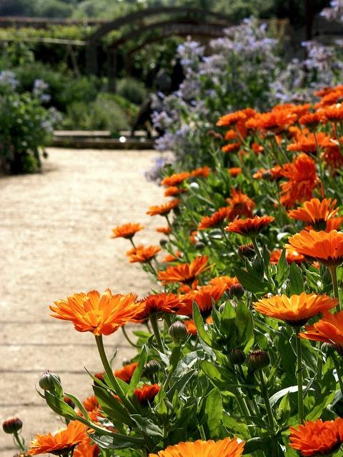 88 Best Images About Marigold Lane On Pinterest Gardens Vegetable Garden And Flower