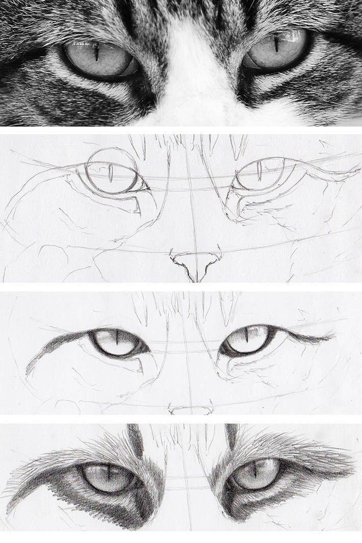 Wie Zeichnet Man Katzenaugen Die Echt Aussehen Photo Klick