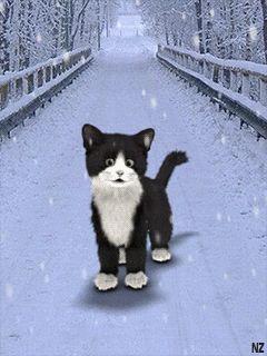 ***GIF***amazing cat