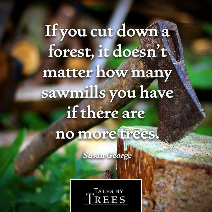 It's a simple truth. Wood is a great resource but we need to manage it properly.  #quote #sustainability #talesbytrees