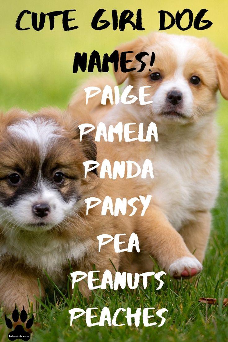 300 Girl Dog Names A Z Girl Dog Names Dog Names Cute Names