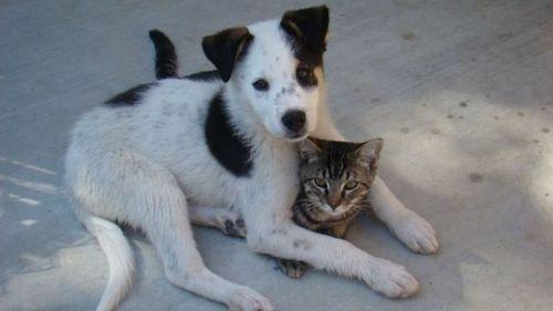 friendshipBuddy, Awww, Animal Lovers, Cat, Best Friends, Furries Friendship, Friends Dogs, Dogs Love, Adorable Animal
